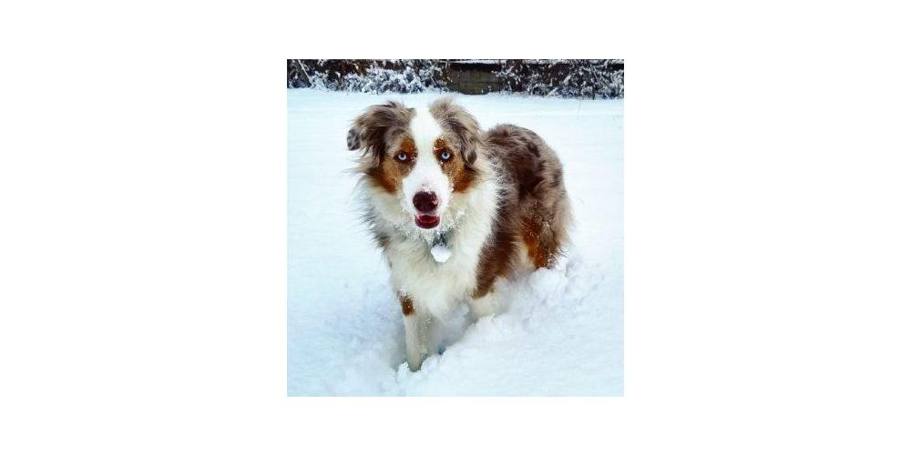 Keep Your Dog Active In Bad Weather