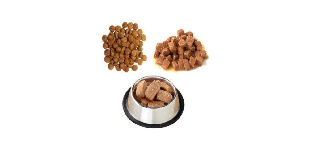 Cat Food Types (Pros & Cons)